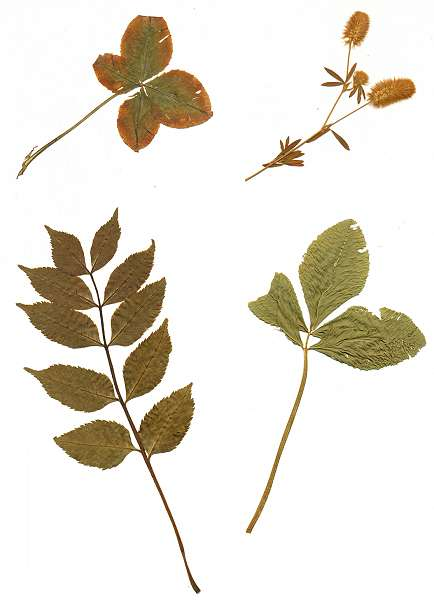 lesezeichen getrocknete pflanzen buechersammler