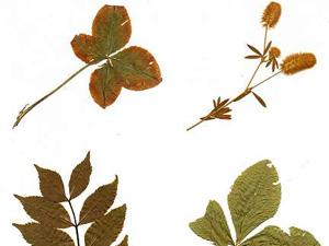 herbarium buechersammler. Black Bedroom Furniture Sets. Home Design Ideas