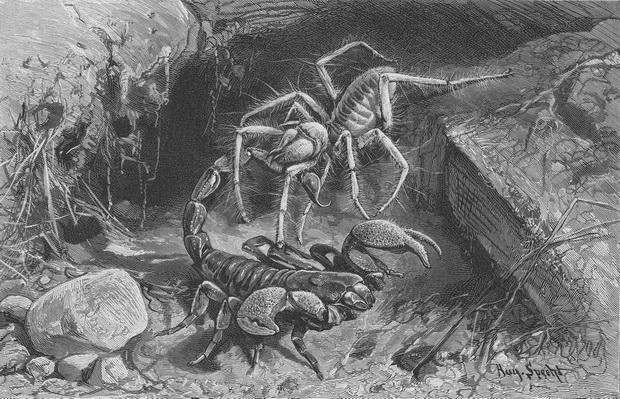 Skorpion_Spinne